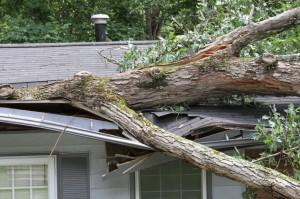 emergency-tree-removal-eugene