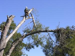 eugene-oregon-tree-removal